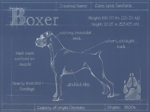 Framed Blueprint Boxer Print