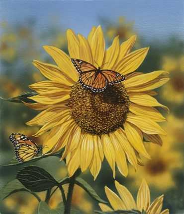 Framed Sunflower/Butterflies Print