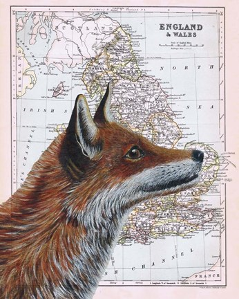 Framed British Fox Print