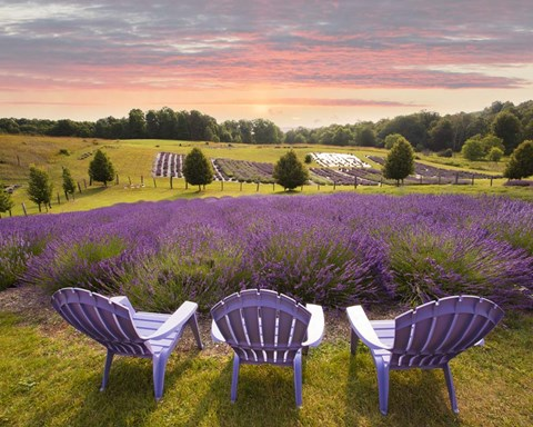 Framed Lavender Chairs, Horton Bay, Michigan '14-color Print