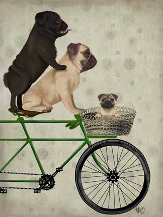 Framed Pugs on Bicycle Print