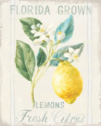 Framed Floursack Lemon I Print