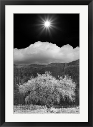 Framed Cottonwood & Sunbeams, Canyon de Chelly, Arizona 10 Print