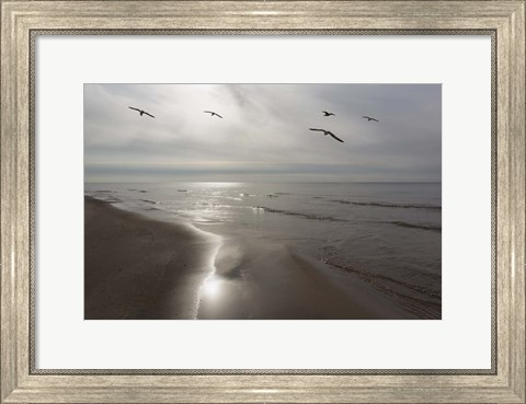 Framed Five Birds, Grand Haven, Michigan '14 - Color Print