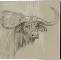 Longhorn Sketch II Fine-Art Print