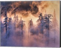 Evergreens In Fog, Mt Hood National Forest, Oregon Fine-Art Print