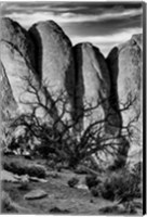 Gnarled Tree Against Stone Fins, Arches National Park, Utah (BW) Fine-Art Print