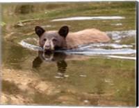 Black Bear Cub Fine-Art Print