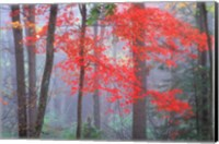 Splash of Red Fine-Art Print