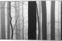 Forest Code Fine-Art Print