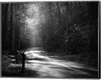 Tremont Road, Smoky Mountains Fine-Art Print