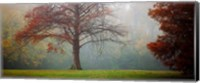 A Late Autumn Morning Fine-Art Print
