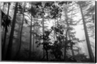 Misty Forest Fine-Art Print