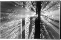 Rays Fine-Art Print