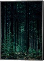 Deep Green Fine-Art Print