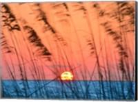 Sun Dance Fine-Art Print