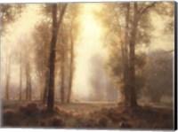Under the Tall Pines Fine-Art Print