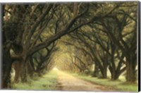Evergreen Alley Fine-Art Print