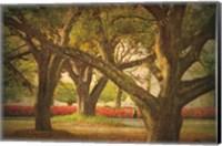 Three Oaks and Azaleas Fine-Art Print