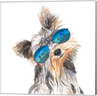 Yorkie with Shades Fine-Art Print