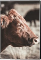 Hungry Cow Fine-Art Print