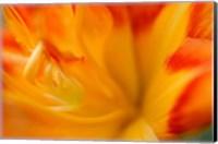 Orange Daylily Fine-Art Print