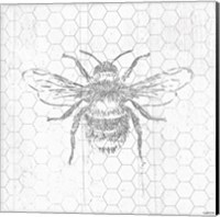 Grey Bee Fine-Art Print