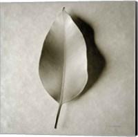 One Leaf Fine-Art Print