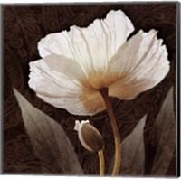 Paisley Poppy I Fine-Art Print