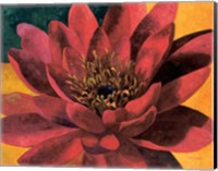 Red Water Lily Fine-Art Print