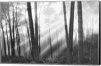 Mystical Forest & Sunbeams Fine-Art Print