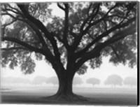 Silhouette Oak Fine-Art Print