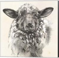 Farm Portrait II Fine-Art Print