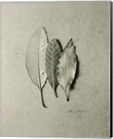 Serrated Trio Fine-Art Print