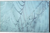 Nature's Jewels I Fine-Art Print