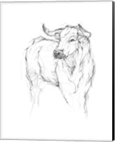 Bull Study I Fine-Art Print