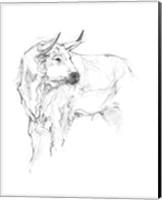 Bull Study II Fine-Art Print