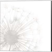 Dandelion Whisper I Fine-Art Print