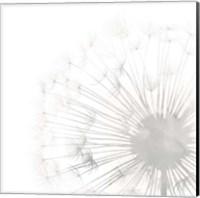 Dandelion Whisper II Fine-Art Print