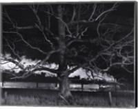 Max Meadows, Virginia, 1957 / NW 1643 Train No. 17 The Birmingham Special Passes a Giant Oak Fine-Art Print