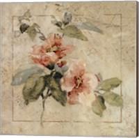 Provence Rose I Fine-Art Print