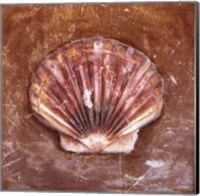 Sea Shell Fine-Art Print