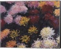 Chrysanthemum, 1897 Fine-Art Print
