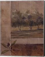Olive Groves I Fine-Art Print