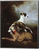 Whippets Fine-Art Print