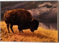 Buffalo Fine-Art Print