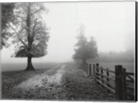 Misty I Fine-Art Print