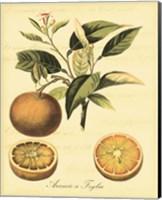 Petite Tuscan Fruits III Fine-Art Print
