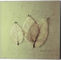 Trio of Skelton Leaves Fine-Art Print