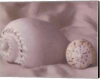 Shell Sonnet II Fine-Art Print